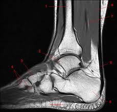 Fuente: http://w-radiologia.es/