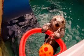 Espero que aun me pueda sentir como nutria en el agua...jugando a baloncesto...aunque eso pasara incluso cuando tenga 140 tacos